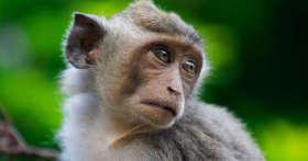 Покормил обезьянку в Тайланде и чуть не сел на 20 лет