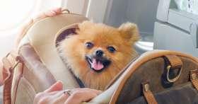 Почему животные в самолете перевозятся платно?