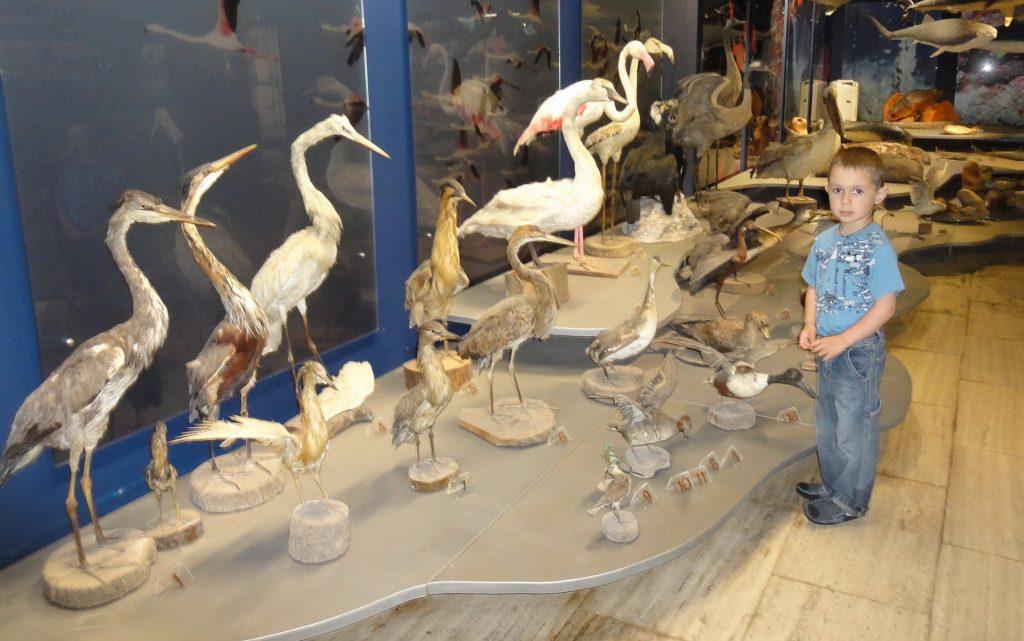 Музей морской жизни