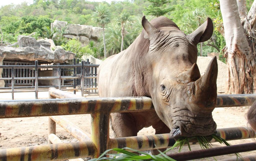 Khao-Kheow zoo