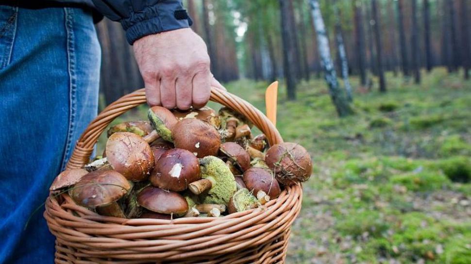 Поехали за грибами