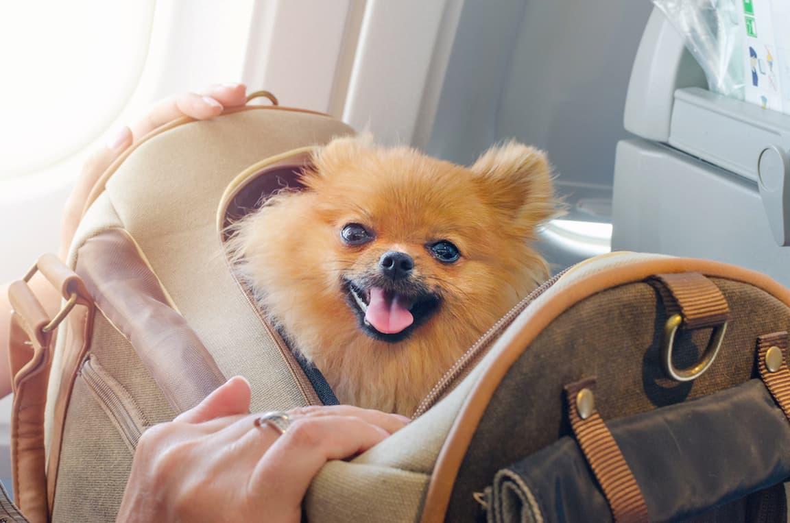 Животное в самолете