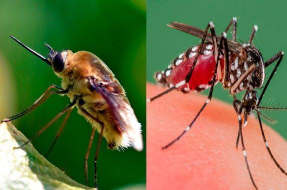 мухи и москиты в Тайланде