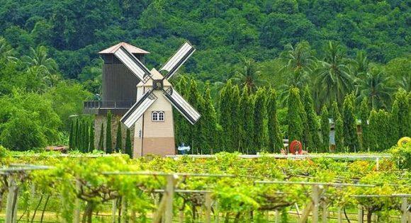 достопримечательность Паттайи - виноградники